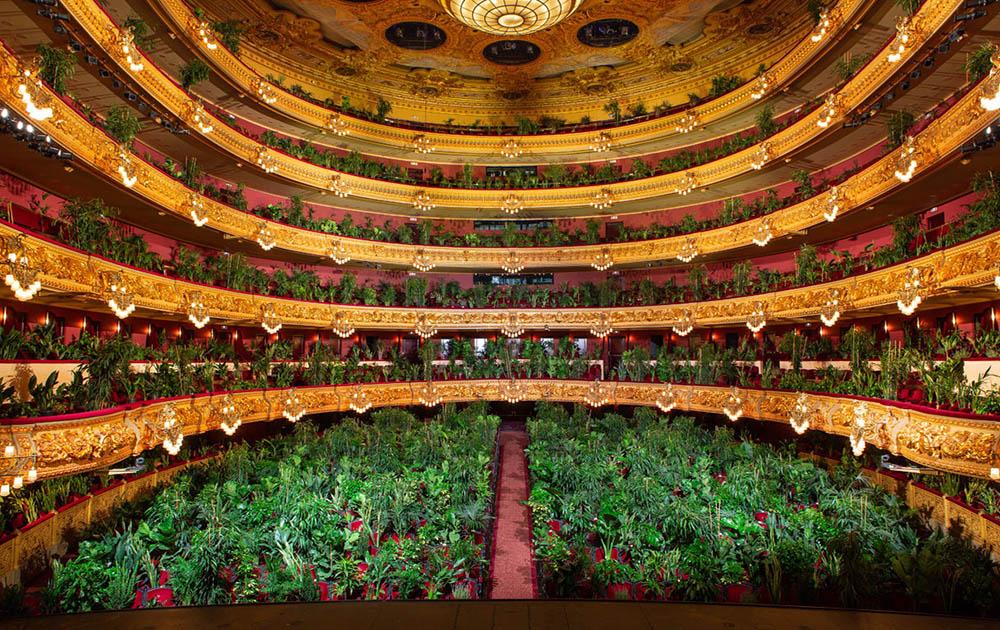 В театре «Лисео» в Барселоне сыграли миниатюру «Хризантемы» для комнатных растений