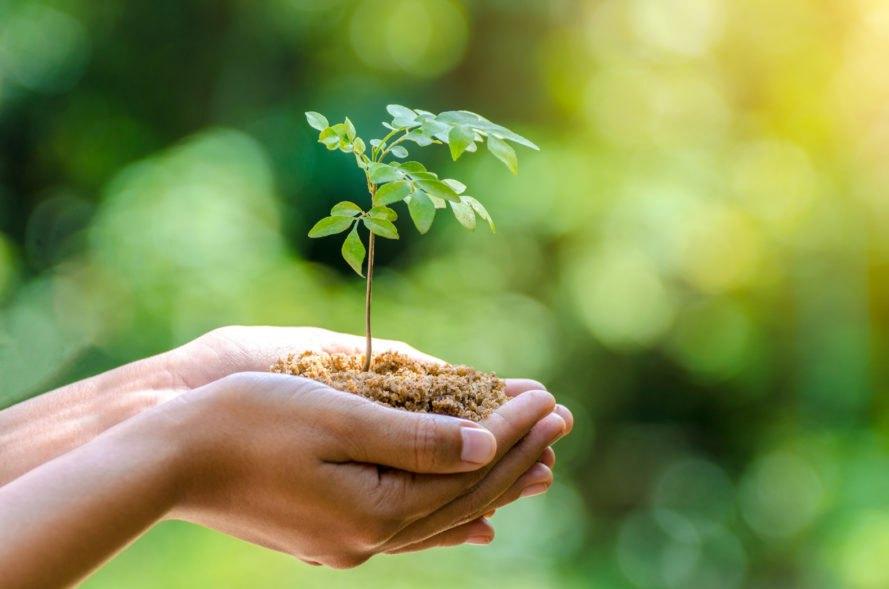 Как компании встают на путь предотвращения экологических катастроф